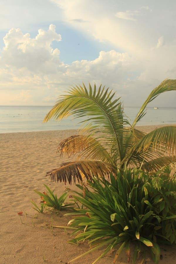 Seven mile beach. Jamaica, Negril royalty free stock photos