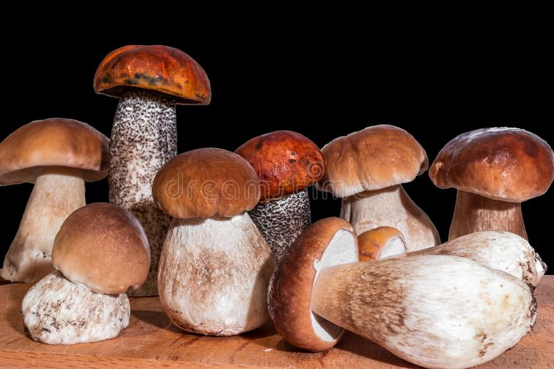 Seven mushrooms boletus and two red-capped scaber stalk stand on a wooden board. On a black background royalty free stock photography