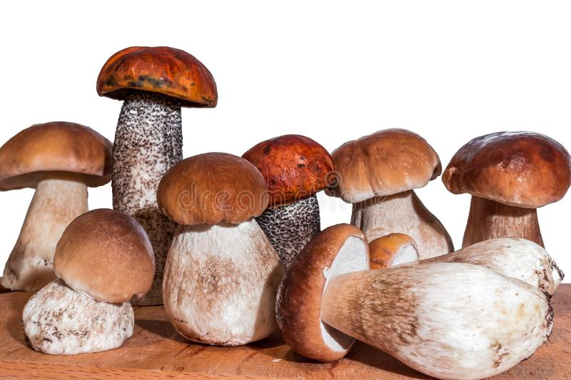 Seven mushrooms boletus and two red-capped scaber stalk stand on a wooden board. On a white background stock images