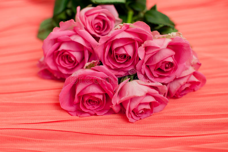seven pink roses on red background royalty free stock images