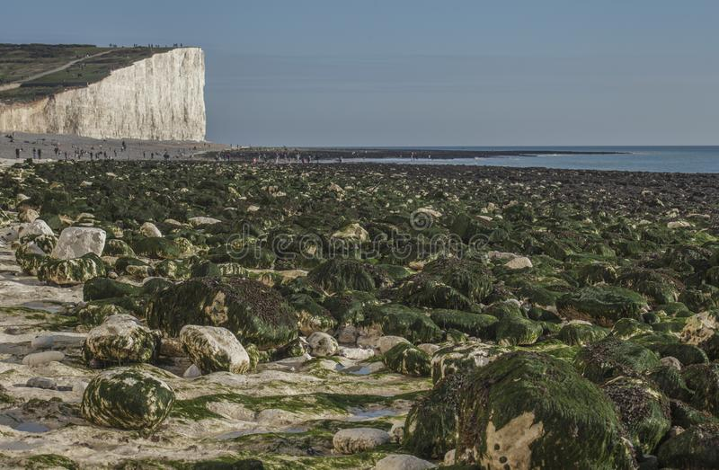Seven Sisters, East Sussex, England, the UK; white beach, blue skies and green seaweeds. This image shows a view of Seven Sisters, East Sussex, England, the UK stock image