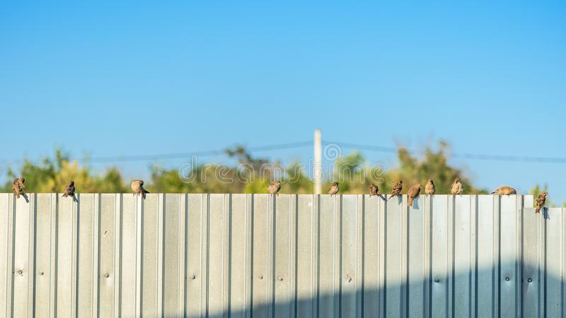 Several birds sit on a metal fence at sunset against a blue sky stock photo