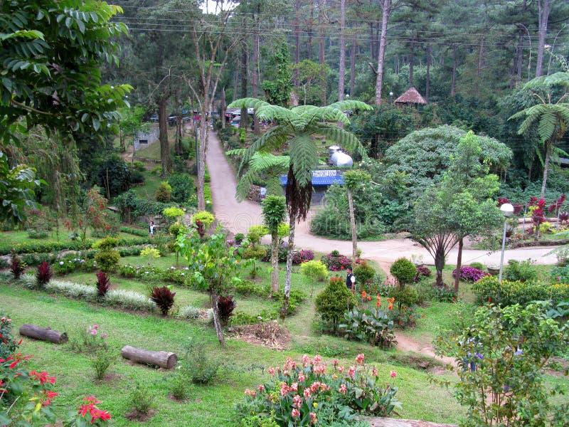 Download Blooming Garden Landscape In Baguio Botanical Garden, Baguio,  Philippines Editorial Stock Image