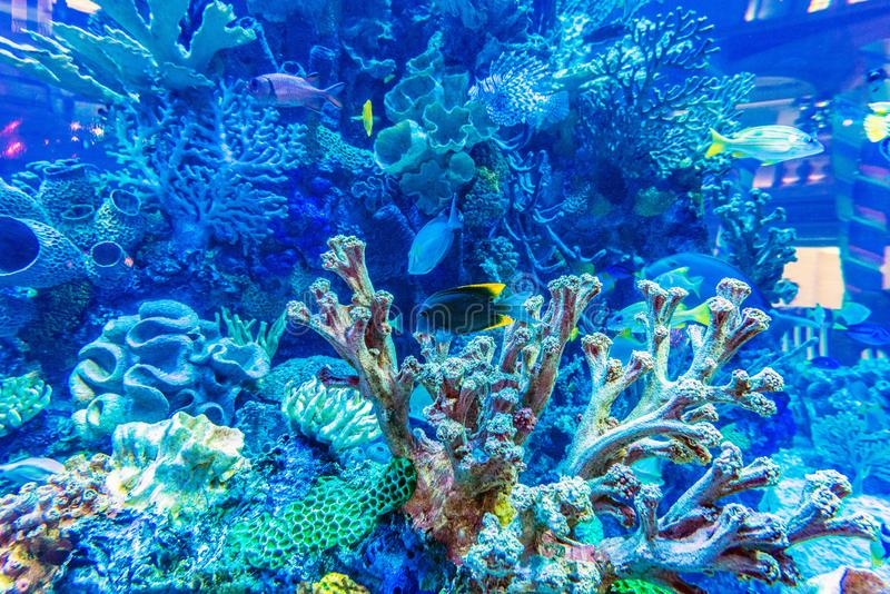 Several colorful fishes. Several colorful fishes in the aquarium in the hotel royalty free stock photo