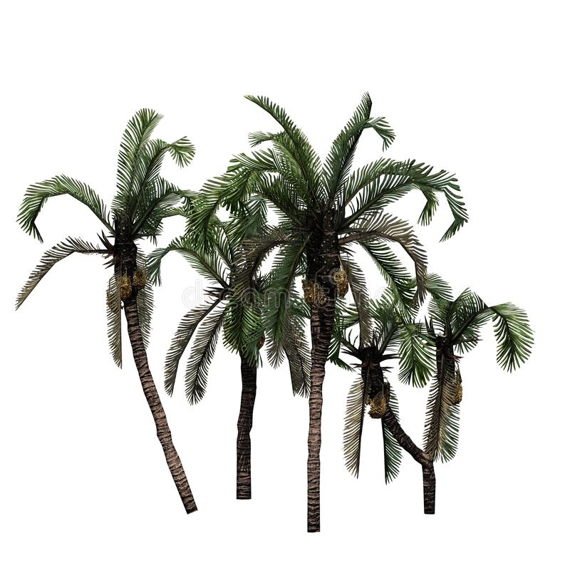 Several Date Palm trees. Isolated on a white background royalty free illustration