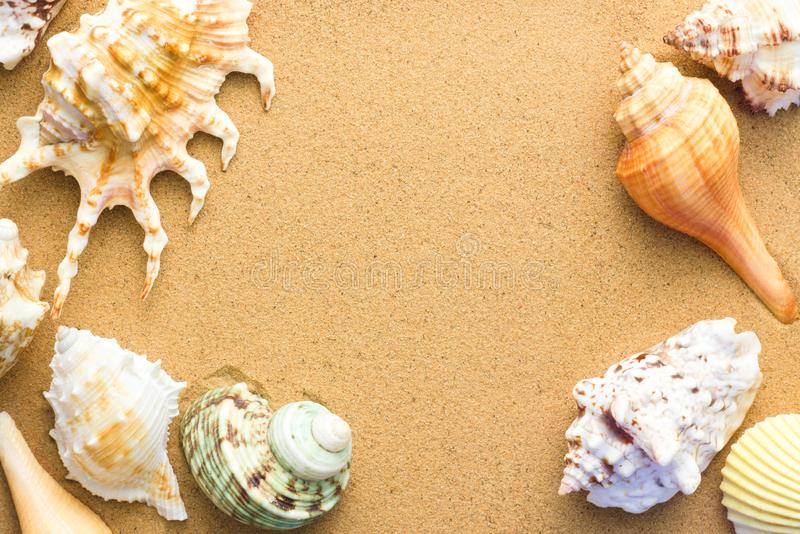 Several different seashells in the sand, top view. Background on resort theme, sea beach royalty free stock photos