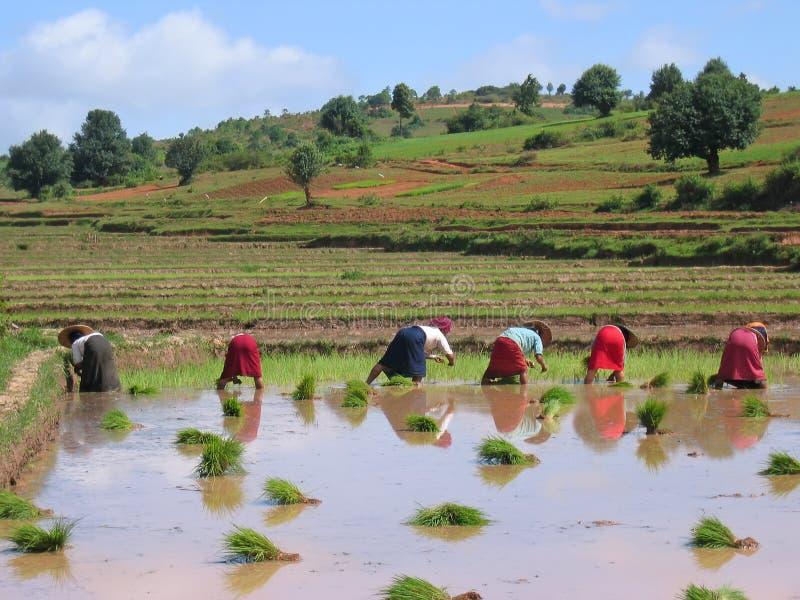 Several farmer women stock photography
