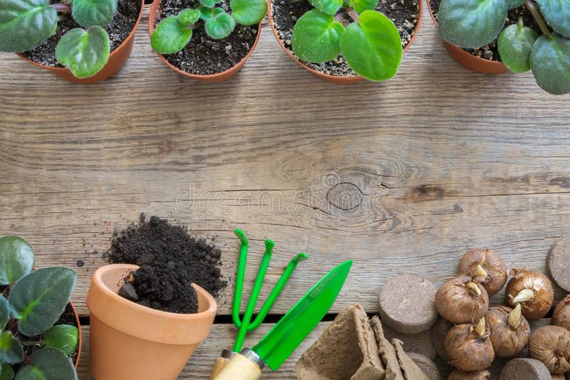 Several flowerpot of houseplants, equipment for pot plants. Copy space for text. Top view, flat lay. royalty free stock photo
