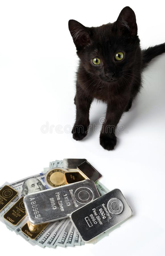 Several gold and silver bars and a coin are lying on hundred-dollar bills in front of a black kitten. Selective focus. Isolated on white royalty free stock photo