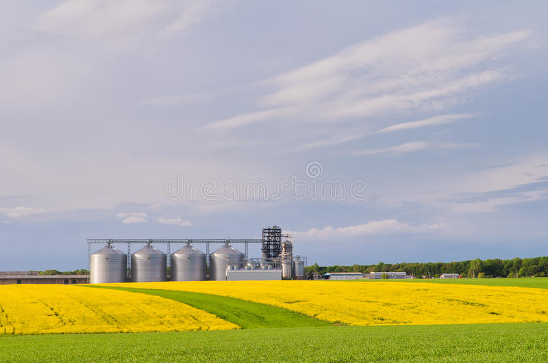 Several granaries with a field of blooming canola and wheat in t. He foreground royalty free stock photography