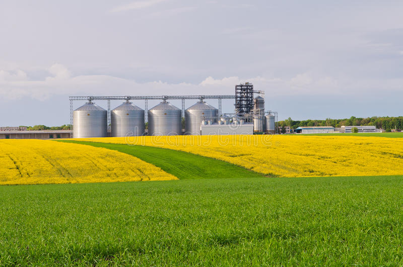 Several granaries with a field of blooming canola and wheat in t. He foreground royalty free stock image