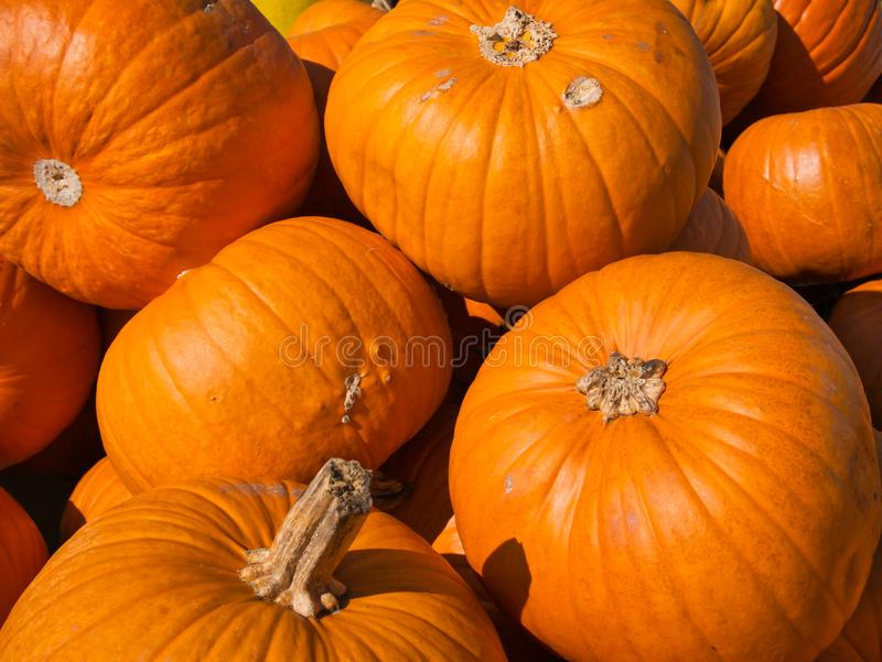 Several Hokkaido pumpkins in orange one with style royalty free stock photos