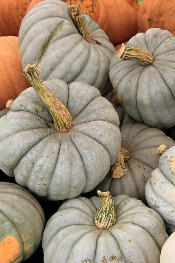 Free Several Jarrahdale Pumpkins At The Farmers Market Royalty Free Stock Images - 44872599