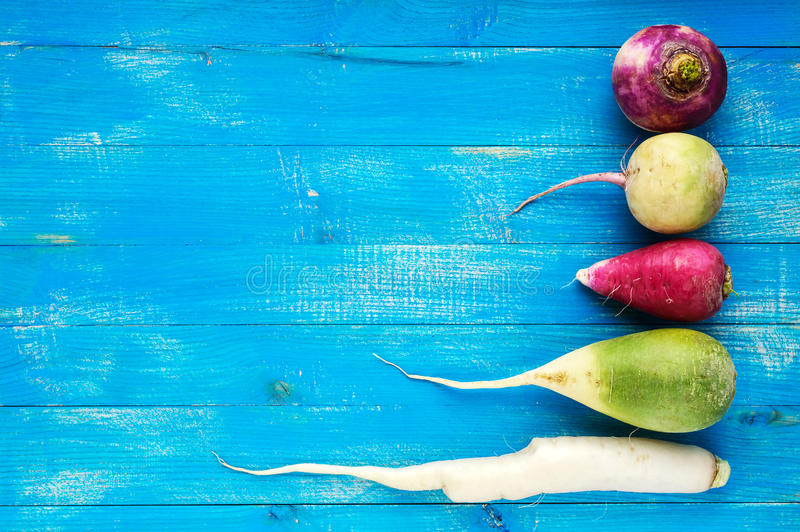 Several kinds of radish daikon, Chinese red, green on a blue sapphire wooden background. Useful vitamins ingredient for salads stock photos