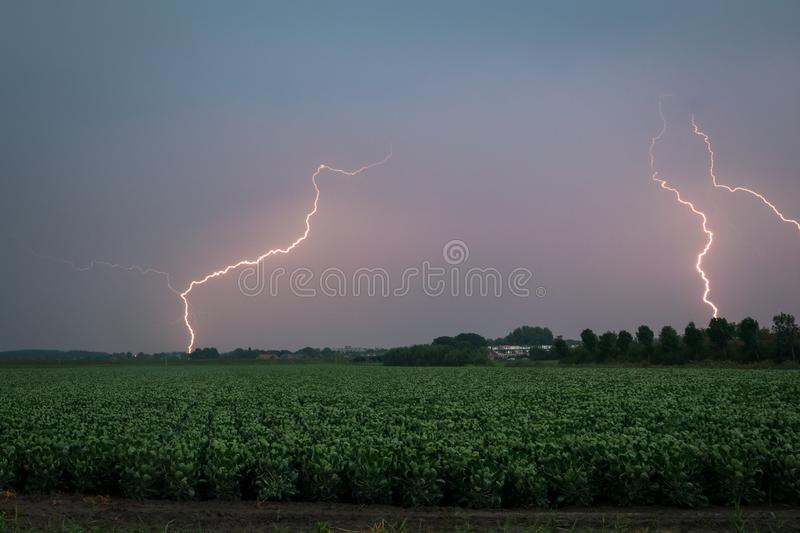 Multiple lightning bolts strike down from a September thunderstorm in the dutch countryside at dawn stock photography
