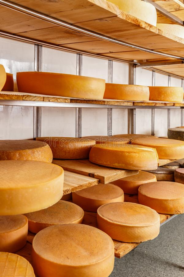 Several mature cheese-wheels. On displayed on shelves at the cheesemaking shop stock image