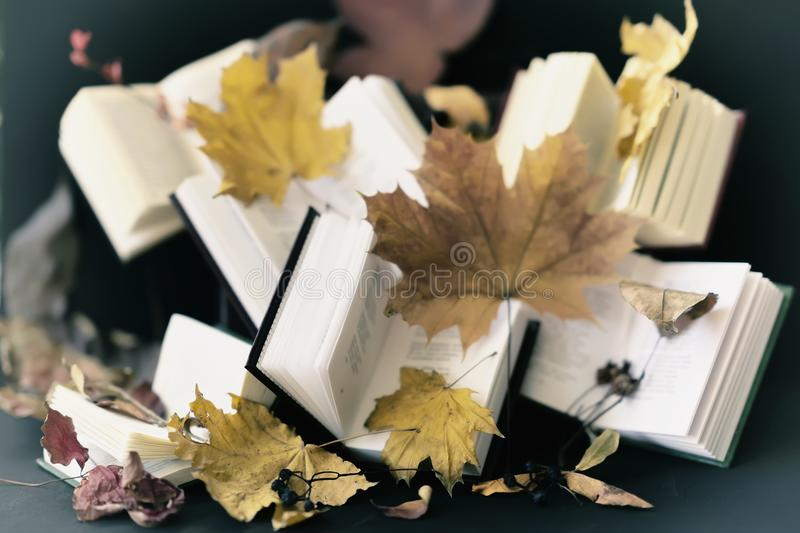 Several open books and autumn fallen leaves. Vintage , rustic still life. Autumn concept of reading time, romantic royalty free stock image
