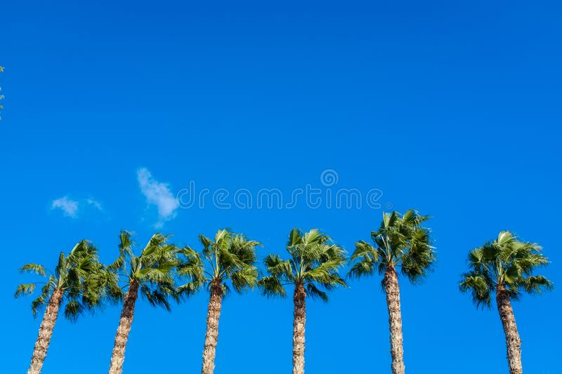 Several palm trees in a line. Several palm trees in a straight line in downtown Limassol, Cyprus stock photography