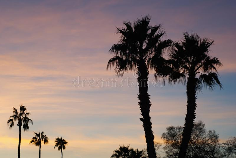 Several Palm trees in sunset royalty free stock photography