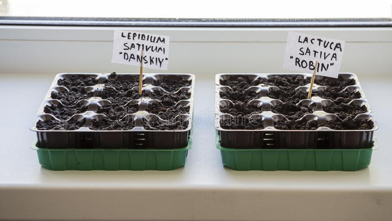Several plastic containers with garden soil. Planted seedlings-Image royalty free stock image