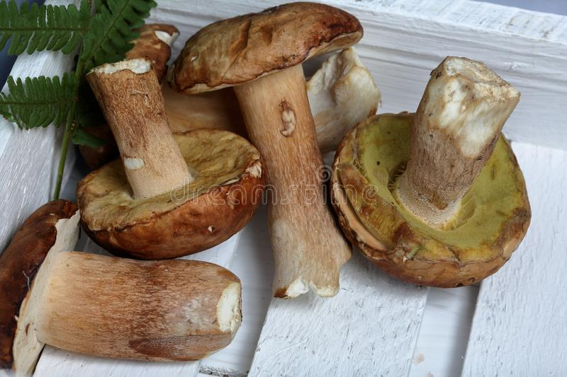 Several porcini mushrooms and a fern leaf. They lie in a wooden box from white painted boards.  stock photos