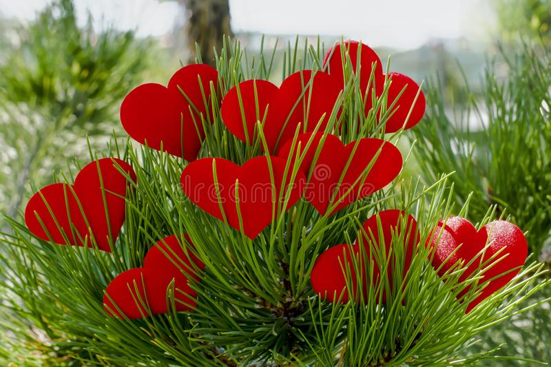 Several red hearts on a background of green tree.Red shapes of a lovely heart. Christmas decoration. Valentine`s day concept. royalty free stock photography