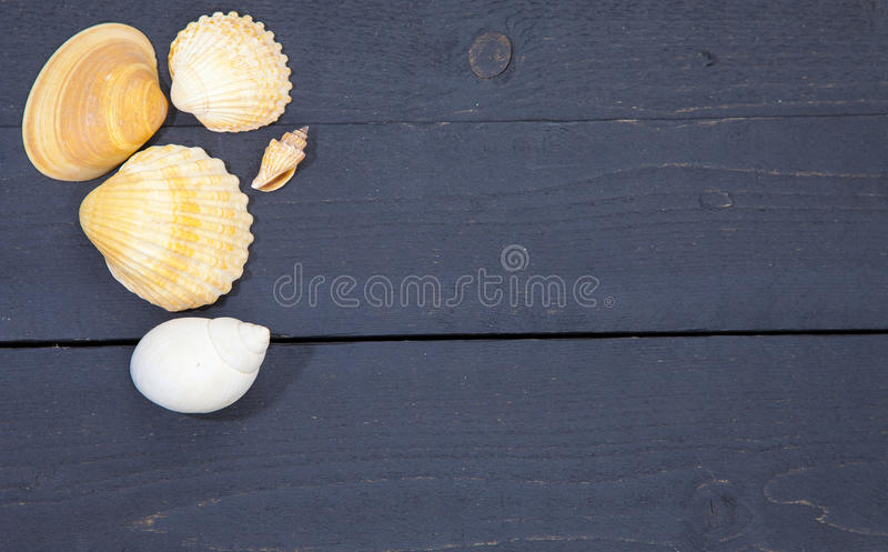 Several sea shells on black wooden background stock photo
