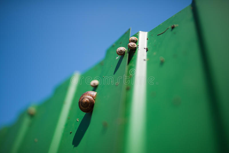 Several snails of different sizes on a bright green fence under blue skies royalty free stock photos