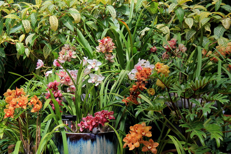 Several varieties of exotic orchids in landscaped garden. Beautiful landscape shows variety of colorful exotic orchids in tropical garden stock photos