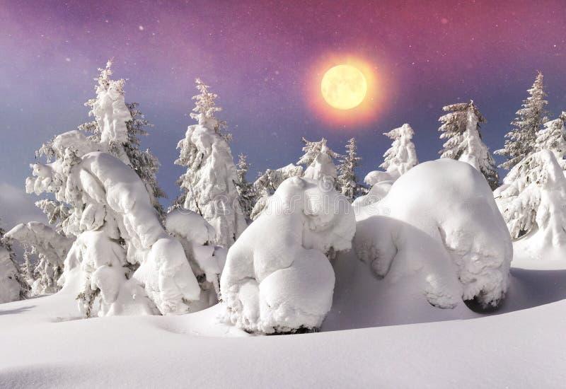 Severe winter landscape. Alpine Heath after a severe bad weather threatening, menacing and frightening. Ukraine Karpaty Montenegrin ridge - the highest peak in royalty free stock image