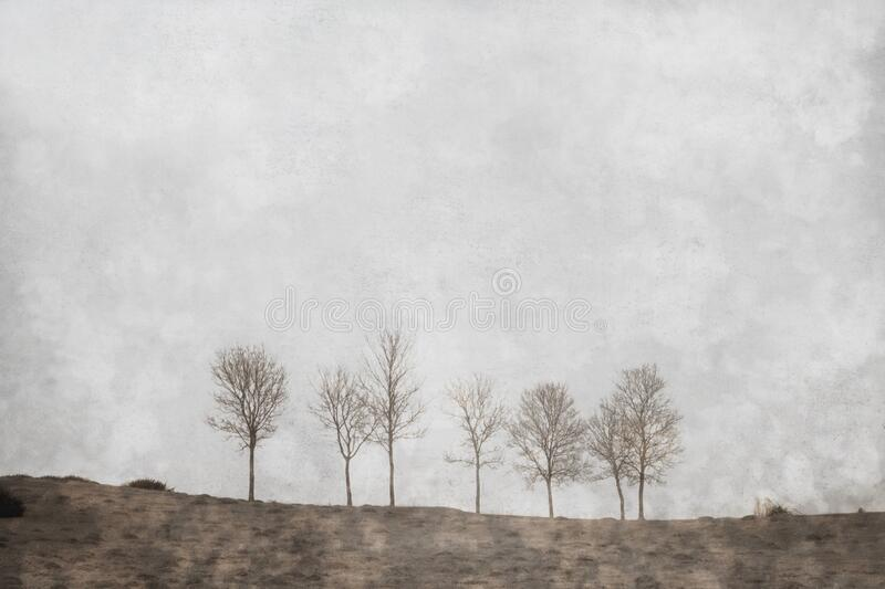 Severn trees in a line on a winters day. With a digital paint effect. With a grunge, textured edit.  royalty free stock image