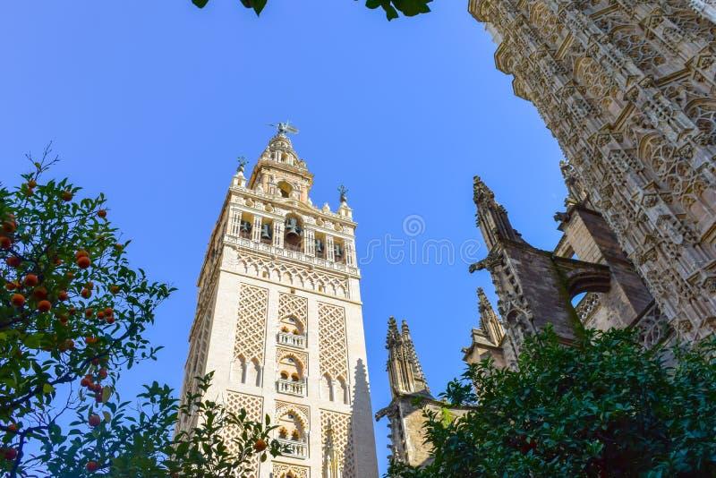 Sevilla Cathedral en Giralda door oranje bomen wordt omringd die stock fotografie