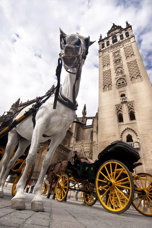 Sevilla - het paardvervoer van de Toerist stock foto's