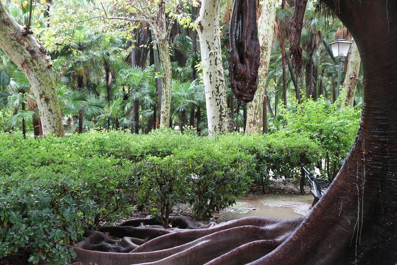 Download Sevilla park obraz stock. Obraz złożonej z giganty, hiszpania - 57655771