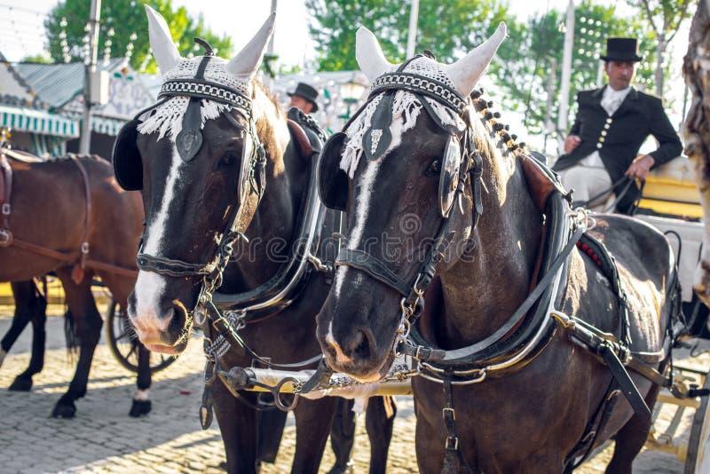 Decorated Andalusian black horses at the April Fair, Seville Fair Feria de Sevilla. royalty free stock image