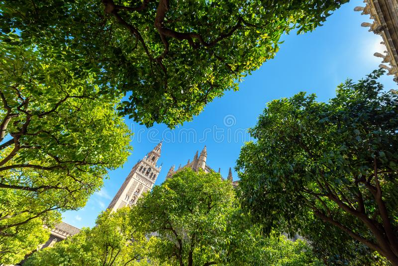 Seville Cathedral and Orange Grove. La Giralda tower as seen from an orange grove in the cathedral of the UNESCO World Heritage city of Seville, Spain stock photo