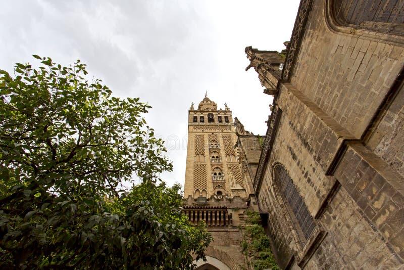 Seville domkyrka och de Giralda sikterna från trädgården av nollan royaltyfri foto