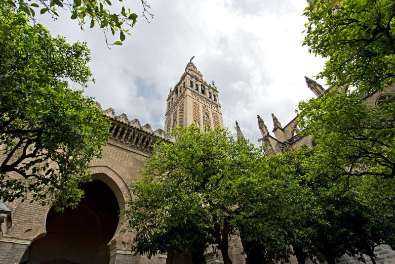 Seville domkyrka och de Giralda sikterna från trädgården av nollan royaltyfria bilder