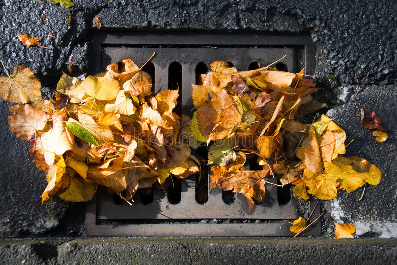 Sewer clogged with fallen leaves. Sewer grate clogged with fallen leaves after an autumn storm royalty free stock photography