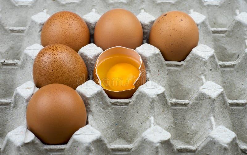 Sex ägg i pappers- magasin fotografering för bildbyråer