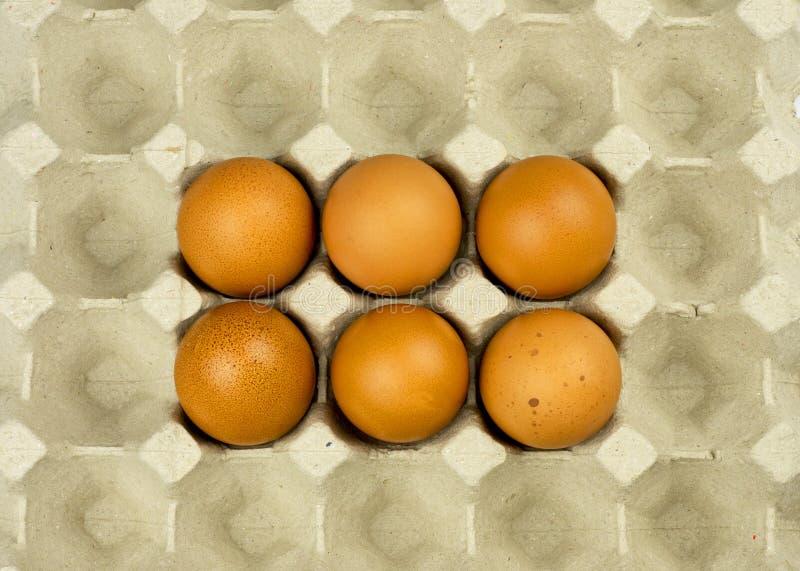 Sex ägg i pappers- magasin royaltyfria foton