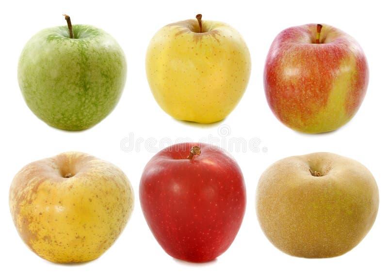 Sex äpplen Royaltyfri Fotografi