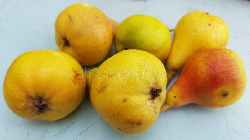 Sex mogna gula päron uppe på den skrapade tabellen royaltyfri foto