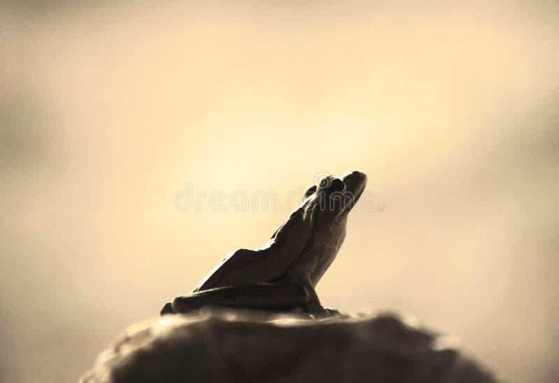 Sexy Frosch lizenzfreie stockfotos