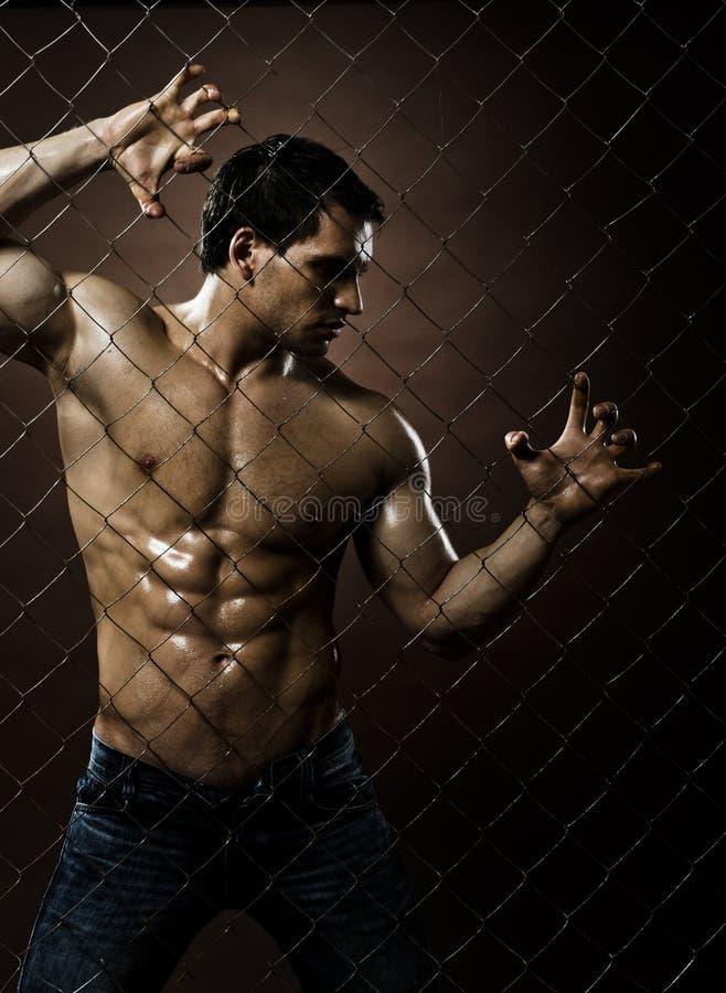 Download Guy stock photo. Image of felon, bodybuilder, brutal - 25908278