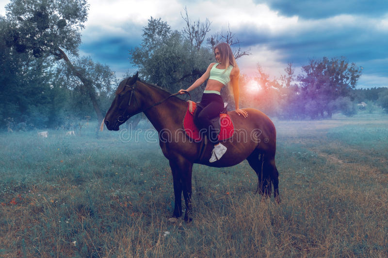 Horsewoman posing on a horse. Young horsewoman posing on a horse stock photography