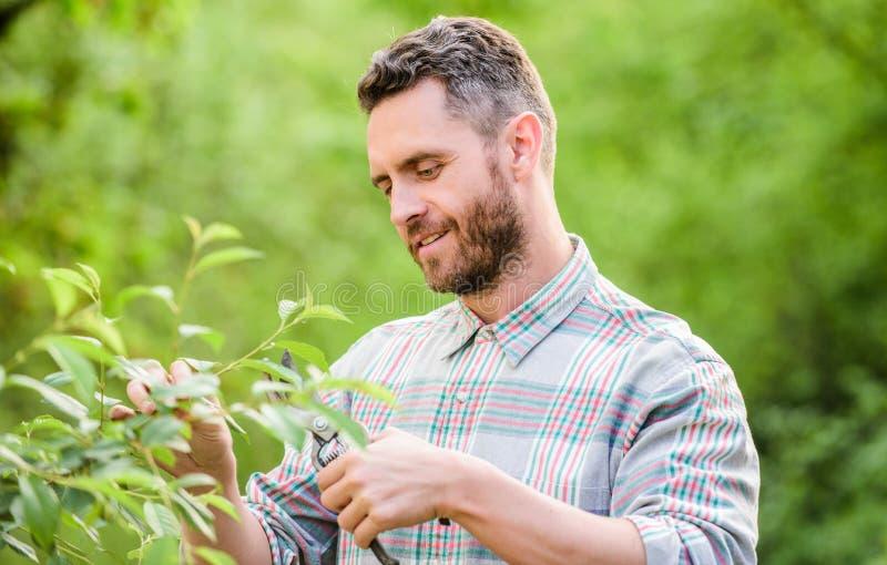 sexy Landwirt schnitt Blumen mit Zangen muskul?se Ranchmann-Sorgfaltanlagen Landwirtschaft und Landwirtschaftsbearbeitung Fr?hjah stockfotografie