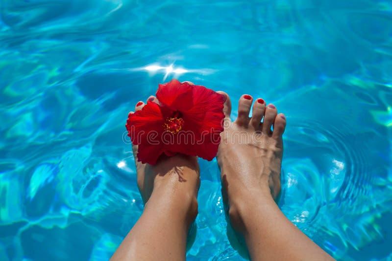 Sexy vrouwelijke naakte benen met hibiscus over zwembad stock foto