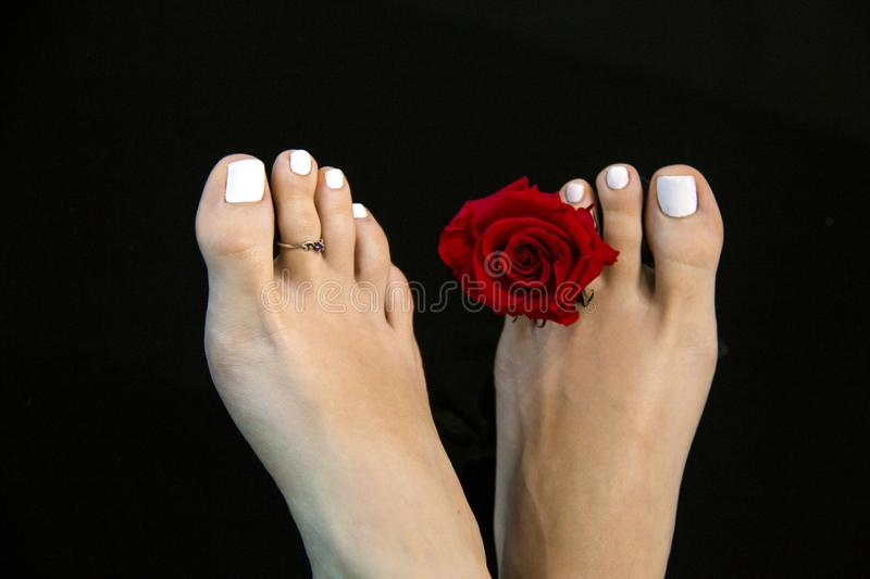 Detail of pretty female feet with beauty red rose flower isolated on deep black background, white pedicure nails, Morton's toe royalty free stock photography