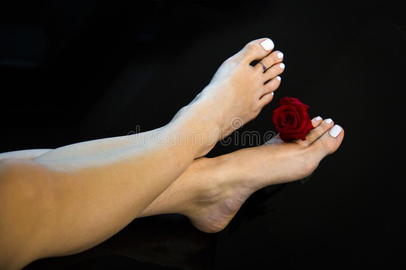 Nice woman feet crossed with fresh red rose flower, white nails polish, smooth skin and heels, perfect beauty girl feet isolated stock photo
